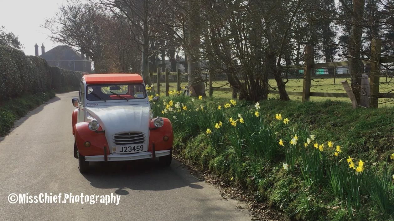 2cv in daffodil bordered lane
